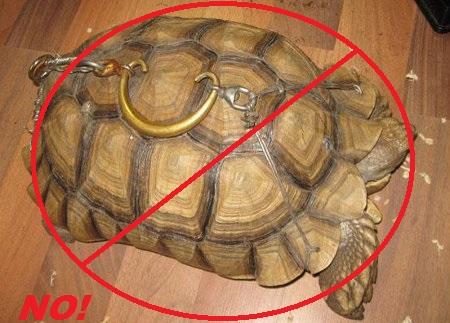 Turtle FAQ's - Central Mississippi Turtle Rescue